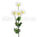 Ветка белой хризантемы