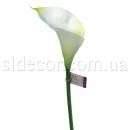 Кала без листьев бело-зеленая