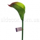 Кала без листьев зеленая