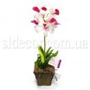 Орхидея в горшочке