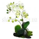 Орхидея на коряге