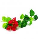 Лианы с цветами
