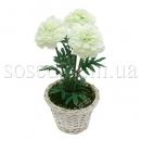 Цветы в горшочках купить Украина