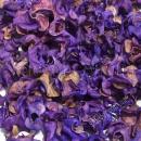 Сухоцветы сиреневый