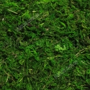 Натуральный мох для декора