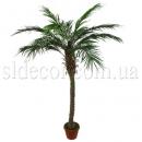 Высокая финиковая пальма