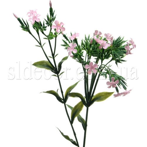 Мелкоцвет розовый