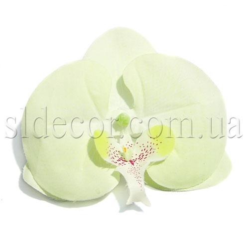 Купить головки орхидей