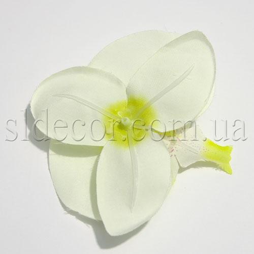 Головка орхидеи с обратной стороны