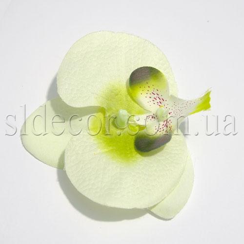 Головка орхидеи бело-зеленая