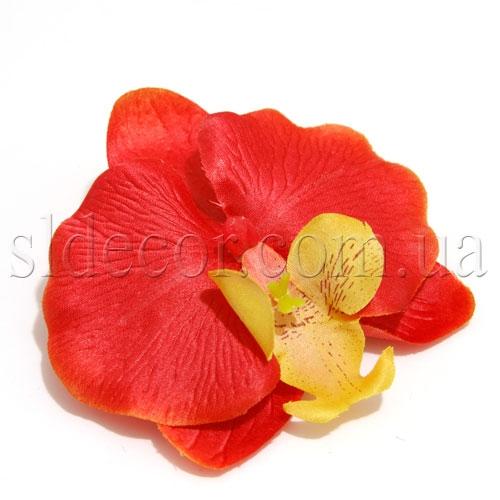 Головки орхидей купить