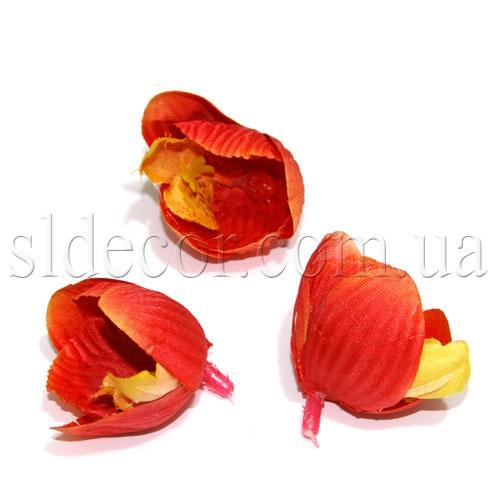 Бутоны орхидей