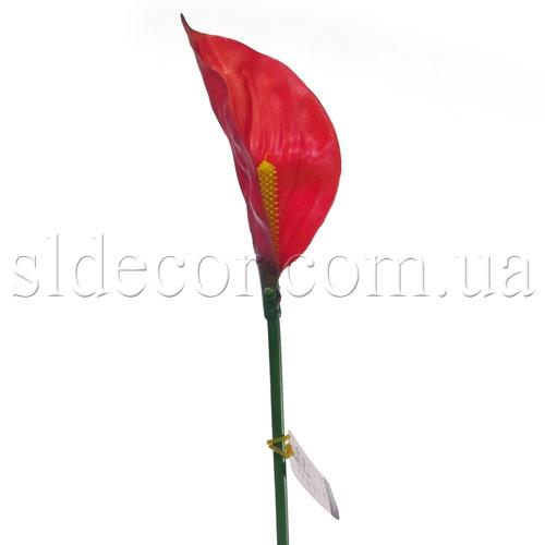Кала без листьев красная