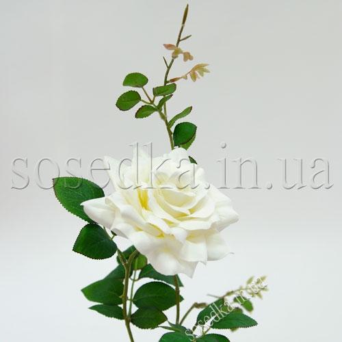 Роза белая Голландия