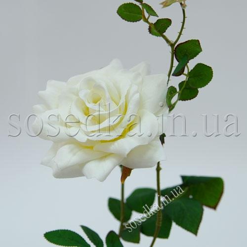 Роза Голландия белая