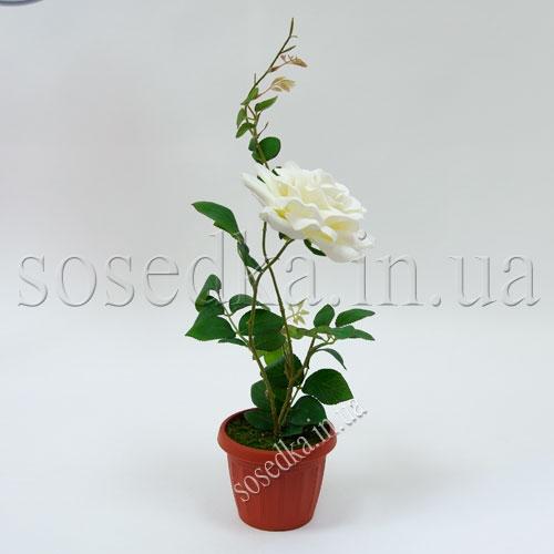 Роза в пластиковом горшочке