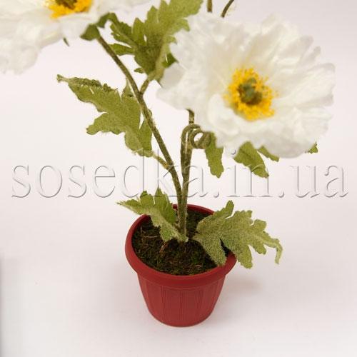 Цветы в горшочке маки