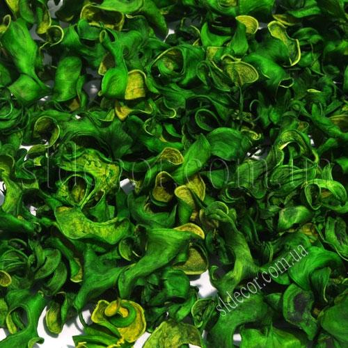 Сухоцветы зеленый