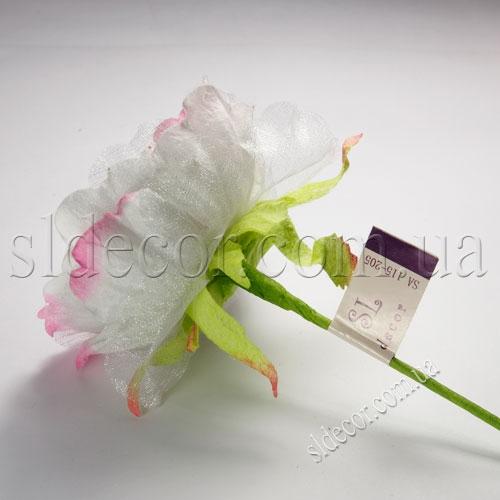 Головка бело-розового пиона