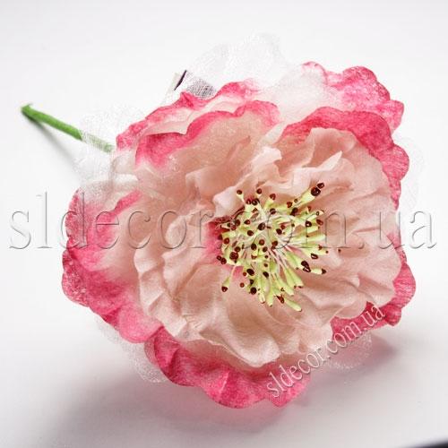 Красивые головки цветов