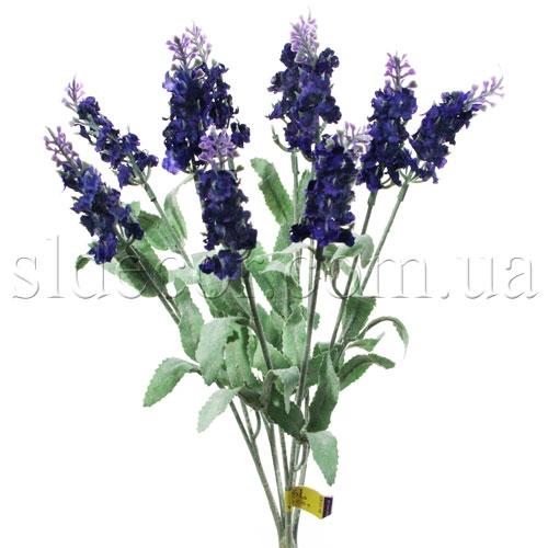 Лаванда фиолетовая