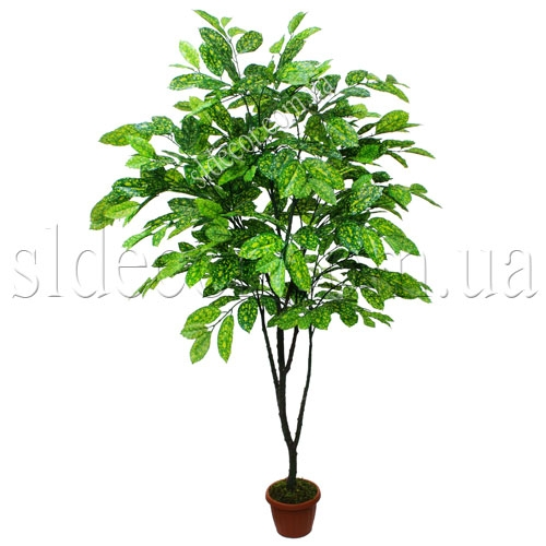 Искуссвенное дерево аукуба