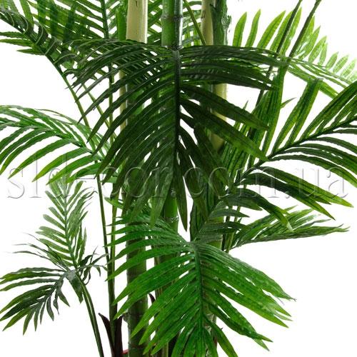 Листья пальмы Арека