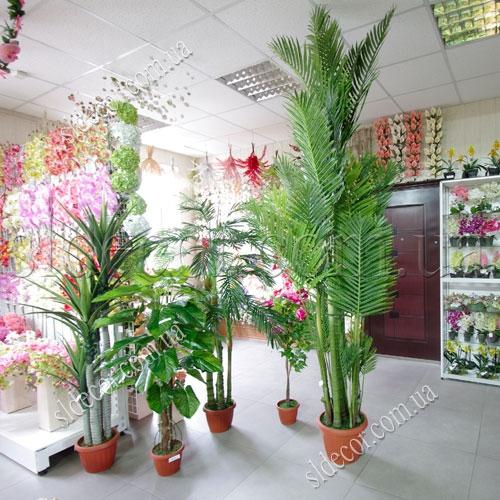 Нерасправленная пальма