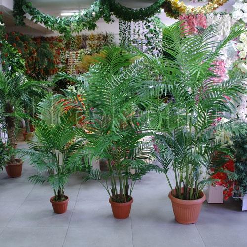 Пальма для оформления интерьеров
