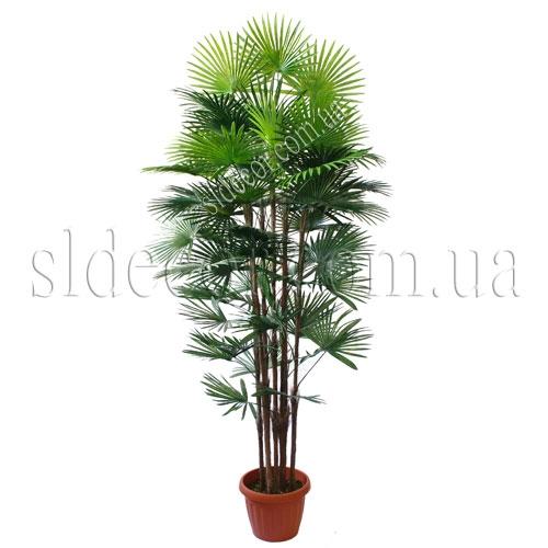 Искусственная веерная пальма