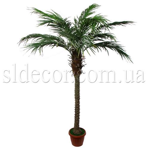 Финиковая пальма недорого