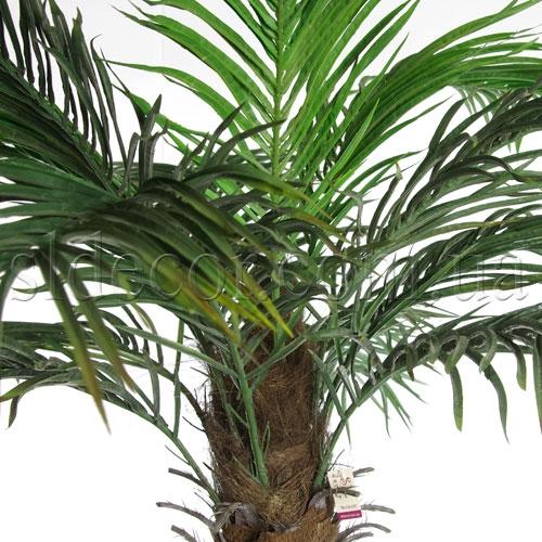 Листья финиковой пальмы