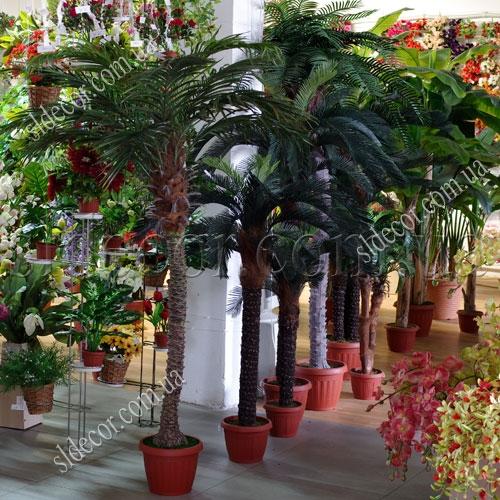 Пальма в выставочном зале