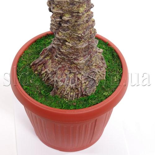 Посадка пальмы в горшок
