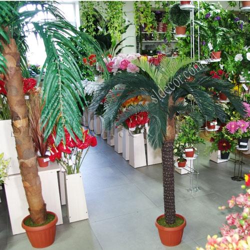 Пальма для оформления интерьера
