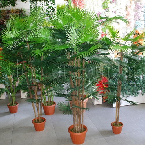 Пальма искусственная веерная