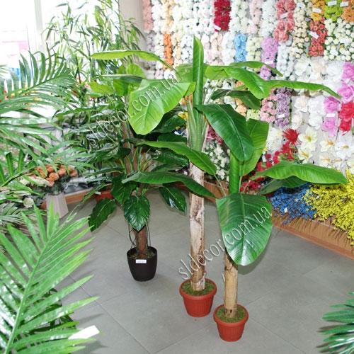 Банановые пальмы купить