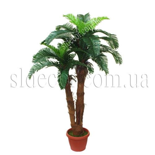 Пальма двухствольная