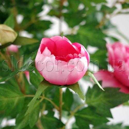 Головка пиона розовая