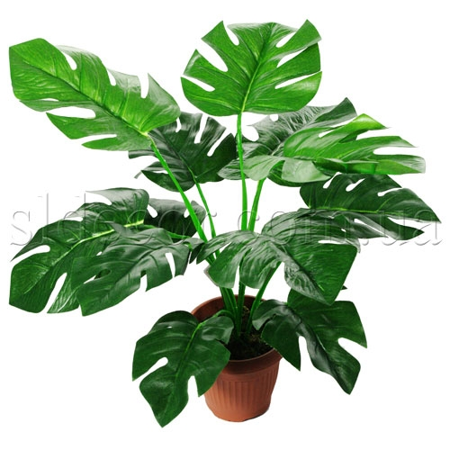 zelen-buketi-liani-dostavka-tsvetov-zelenodolsk-vk