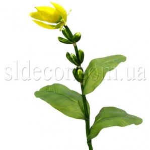 Цветок банана желтый