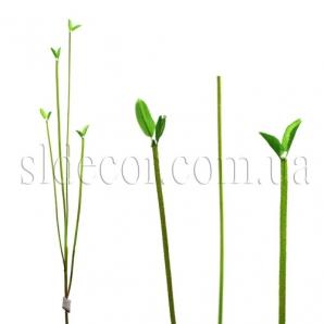 Ветка с молодыми листочками