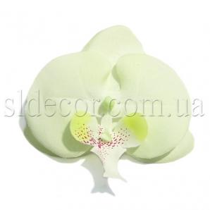 Головка орхидеи