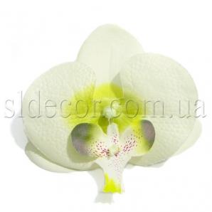 Головки цветов орхидеи