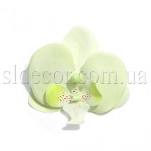 Головки орхидей