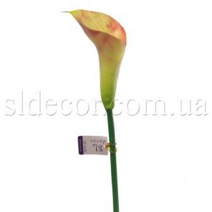 Кала без листьев желто-розовая
