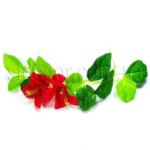 Небольшая лиана с красными цветами