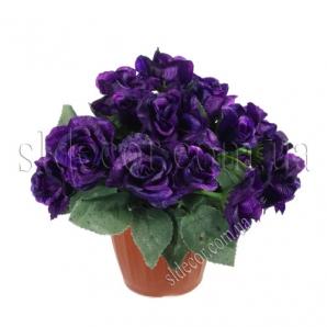 Купить цветы в горшках киев эксклюзивные комнатные цветы киев купить
