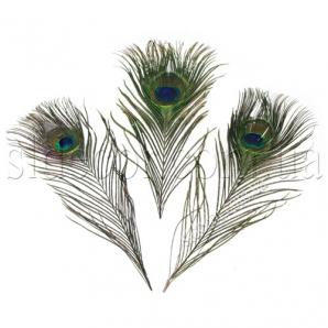 Натуральное перо павлина