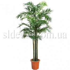 Пальма Арека 3,5м